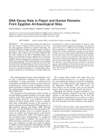 DNA decay rate in papyri and human remains from Egyptian archaeological sites.