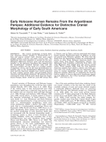 Early Holocene human remains from the Argentinean Pampas  Additional evidence for distinctive cranial morphology of early South Americans.