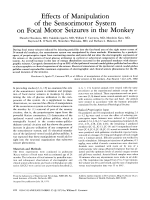 Effects of manipulation of the sensorimotor system on focal motor seizures in the monkey.