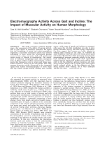 Electromyography activity across gait and incline  The impact of muscular activity on human morphology.