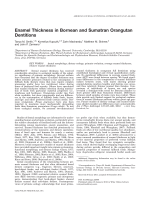 Enamel thickness in Bornean and Sumatran orangutan dentitions.