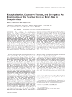 Encephalization  expensive tissues  and energetics  An examination of the relative costs of brain size in strepsirrhines.