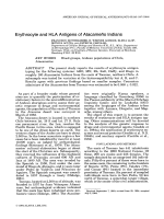 Erythrocyte and HLA antigens of Atacameo Indians.