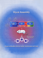 Glycals in Organic Synthesis  The Evolution of Comprehensive Strategies for the Assembly of Oligosaccharides and Glycoconjugates of Biological Consequence.