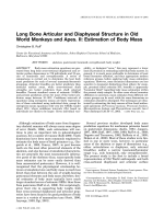 Long bone articular and diaphyseal structure in Old World monkeys and apes. II  Estimation of body mass