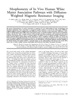 Morphometry of in vivo human white matter association pathways with diffusion-weighted magnetic resonance imaging.