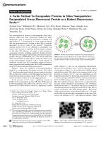 A Facile Method To Encapsulate Proteins in Silica Nanoparticles  Encapsulated Green Fluorescent Protein as a Robust Fluorescence Probe.
