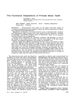 The functional adaptations of primate molar teeth.