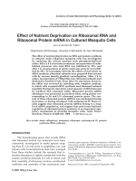 Effect of nutrient deprivation on ribosomal RNA and ribosomal protein mRNA in cultured mosquito cells.