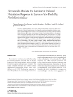 Eicosanoids mediate the laminarin-induced nodulation response in larvae of the flesh fly  Neobellieria bullata.