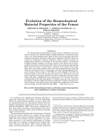 Evolution of the biomechanical material properties of the femur.