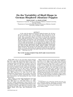 On the variability of skull shape in German shepherd (Alsatian) puppies.