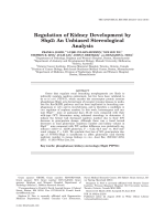 Regulation of Kidney Development by Shp2An Unbiased Stereological Analysis.