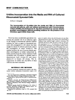 Uridine Incorporation into the Media and RNA of Cultured Rheumatoid Synovial Cells.