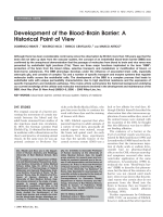 Development of the blood-brain barrierA historical point of view.