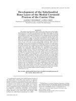Development of the subchondral bone layer of the medial coronoid process of the canine ulna.
