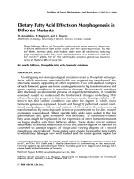 Dietary fatty acid effects on morphogenesis in bithorax mutants.