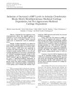 Induction of increased cAMP levels in articular chondrocytes blocks matrix metalloproteinasemediated cartilage degradation but not aggrecanase-mediated cartilage degradation.