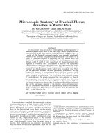 Microscopic anatomy of brachial plexus branches in Wistar rats.