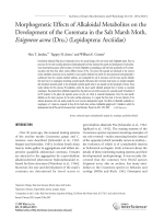 Morphogenetic effects of alkaloidal metabolites on the development of the coremata in the salt marsh moth Estigmene acrea Dru. LepidopteraArctiidae