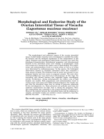 Morphological and Endocrine Study of the Ovarian Interstitial Tissue of Viscacha (Lagostomus maximus maximus).