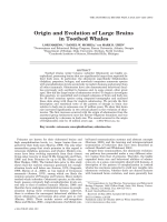 Origin and evolution of large brains in toothed whales.