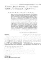 Pheromone  juvenile hormone  and social status in the male lobster cockroach Nauphoeta cinerea.