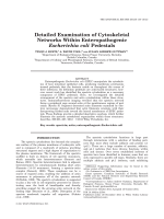 Detailed Examination of Cytoskeletal Networks Within Enteropathogenic Escherichia coli Pedestals.