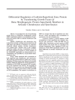 Differential regulation of lubricinsuperficial zone protein by transforming growth factor  bone morphogenetic protein superfamily members in articular chondrocytes and synoviocytes.