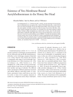 Existence of two membrane-bound acetylcholinesterases in the honey bee head.