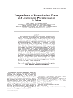 Independence of Biomechanical Forces and Craniofacial Pneumatization in Cebus.