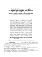 Individual Sarcomere Lengths in Whole Muscle Fibers and Optimal Fiber Length Computation.