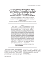 Nkx2.5-negative myocardium of the posterior heart field and its correlation with podoplanin expression in cells from the developing cardiac pacemaking and conduction system