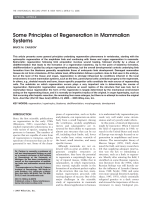 Some principles of regeneration in mammalian systems.