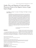 Uptake  flow  and digestion of casein and green fluorescent protein in the digestive system of Lygus hesperus Knight.