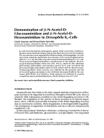 Demonstration of ╬▓-N-acetyl-D-glucosaminidase and ╬▓-N-acetyl-D-hexosaminidase in Drosophila Kc-cells.