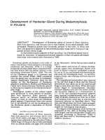 Development of harderian gland during metamorphosis in anurans.