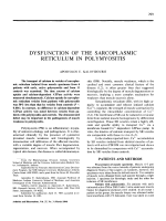 Dysfunction of the sarcoplasmic reticulum in polymyositis.