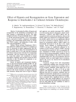 Effect of hypoxia and reoxygenation on gene expression and response to interleukin-1 in cultured articular chondrocytes.