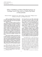 Effect of inhibition of matrix metalloproteinases on cartilage loss in vitro and in a guinea pig model of osteoarthritis.