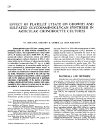 Effect of platelet lysate on growth and sulfated glycosaminoglycan synthesis in articular chondrocyte cultures.