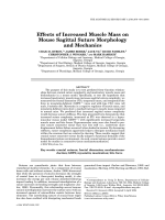Effects of increased muscle mass on mouse sagittal suture morphology and mechanics.