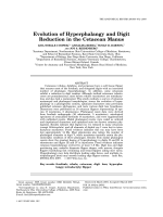 Evolution of hyperphalangy and digit reduction in the cetacean manus.