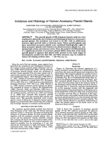 Incidence and histology of human accessory parotid glands.