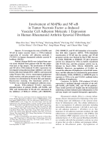 Involvement of MAPKs and NF-╨Ю╤ФB in tumor necrosis factor ╨Ю┬▒induced vascular cell adhesion molecule 1 expression in human rheumatoid arthritis synovial fibroblasts.