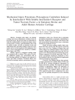 Mechanical injury potentiates proteoglycan catabolism induced by interleukin-6 with soluble interleukin-6 receptor and tumor necrosis factor ╨Ю┬▒ in immature bovine and adult human articular cartilage.