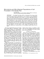 Microtubule and microfilament populations of cell processes in the dental pulp.