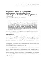 Molecular cloning of a Drosophila melanogaster gene coding for an homologue of human carboxypeptidase E.