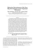 Molecular determinants of the face map development in the trigeminal brainstem.