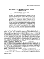 Morphology of the mandibulo-stylohyoid ligament in human adults.